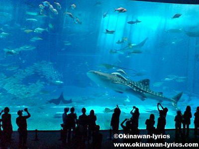 美ら海水族館とイルカショー