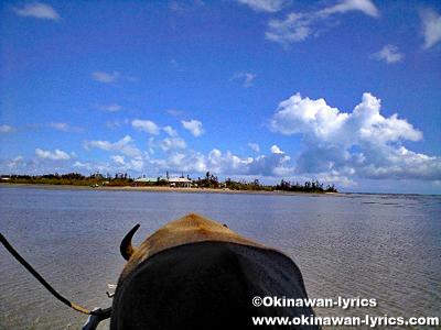 海を渡る水牛車@由布島