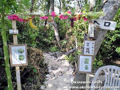 イダの浜の植物園@西表島