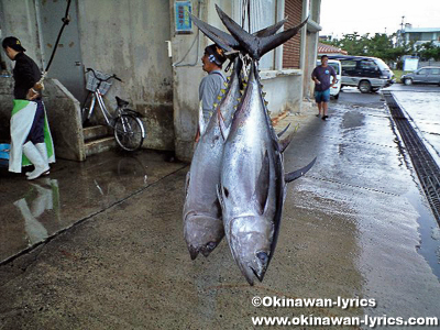 八重山漁協の朝市(メバチマグロ)@石垣島