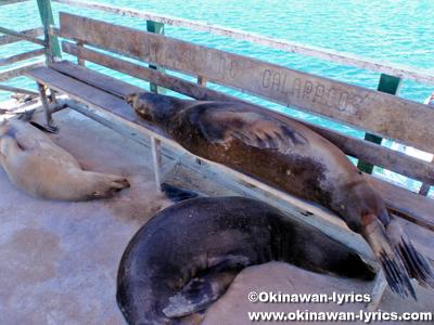 アシカ(sea lion)@バルトラ島(Bltra island), ガラパゴス(Galapagos)