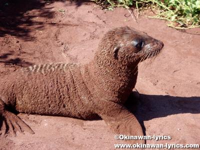 アシカ(sea lion)@ラビダ島(Rabida island), ガラパゴス(Galapagos)