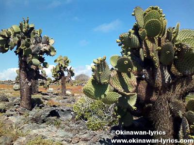 プラザ島(Plazas island)@ガラパゴス(Galapagos)