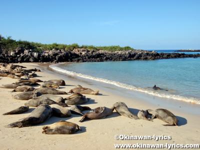 アシカ(sea lion)@サンタフェ島(Santa Fe island), ガラパゴス(Galapagos)