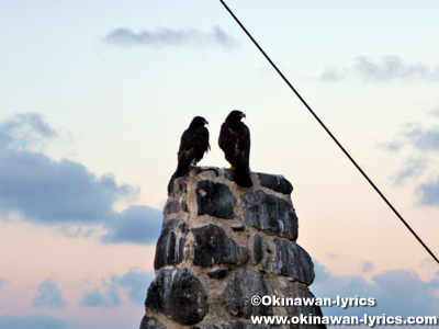 ガラパゴス鷹@エスパニョーラ島(Espanola island), ガラパゴス(Galapagos)