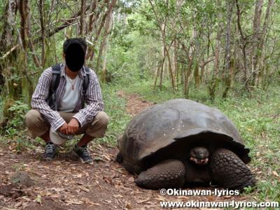 ゾウガメ(giant tortoise)@El Chato近く, サンタクルス島(Santa Cruz island), ガラパゴス(Galapagos)