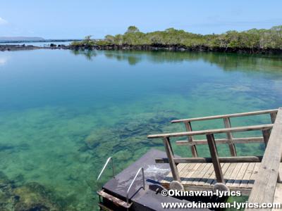 Concha de Perla@イザベラ島(Isabela island), ガラパゴス(Galapagos)