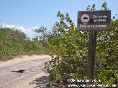 海イグアナの標識(Sign for marine iguana)@イザベラ島(Isabela island), ガラパゴス(Galapagos)