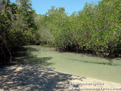 El Estero@イザベラ島(Isabela island), ガラパゴス(Galapagos)