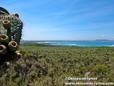 Cerro Orchilla@イザベラ島(Isabela island), ガラパゴス(Galapagos)