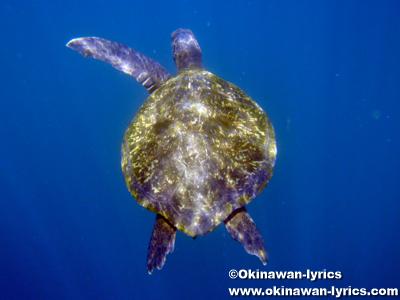 シュノーケル, ウミガメ(sea turtle)@Kicker Rock(León Dormido), ガラパゴス(Galapagos)