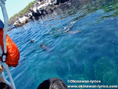 子供のアシカ(baby of sea lion)@ロボス島(Lobos island), ガラパゴス(Galapagos)