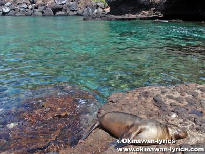Las Tijeretas@サンクリストバル島(San Cristobal island), ガラパゴス(Galapagos)