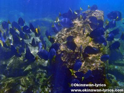 シュノーケル@Las Tijeretas, サンクリストバル島(San Cristobal island), ガラパゴス(Galapagos)