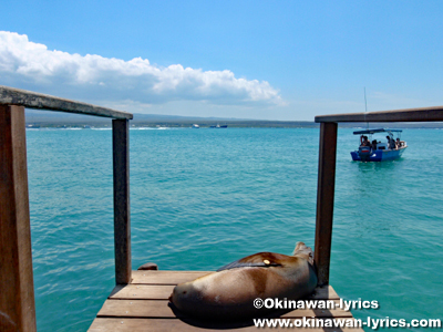 サンタクルス島(Santa Cruz island)@ガラパゴス(Galapagos)