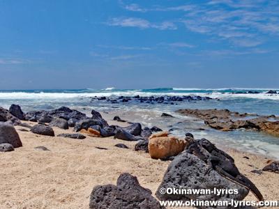 Playa de los Perros@サンタクルス島(Santa Cruz island), ガラパゴス(Galapagos)