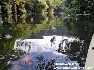 サガリバナ(Barringtonia racemosa)@西表島ナーラ川