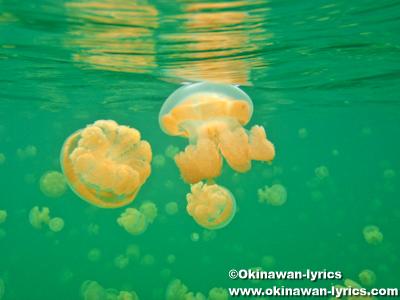 シュノーケル@ジェリーフィッシュレイク(Jelly fish lake), マカラカル島(Macharchar island)