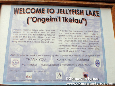 ジェリーフィッシュレイク(Jelly fish lake)@マカラカル島(Macharchar island)