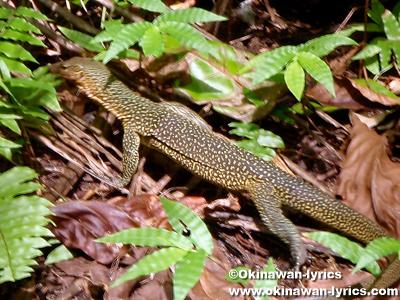 トカゲ(lizard)@カヤンゲル島(Kayangel island)