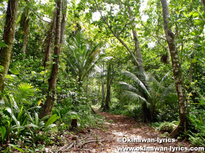 カヤンゲル島の小道(path on Kayangel island)