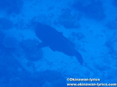 カヤンゲル島Blue Holeのパラオフィッシュ