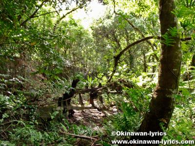リン鉱石集積所跡@アンガウル島(Angaur island)