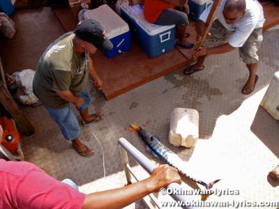 定期船でアンガウル島からマラカル島へ(public boat from Angaur island to Malakal island)