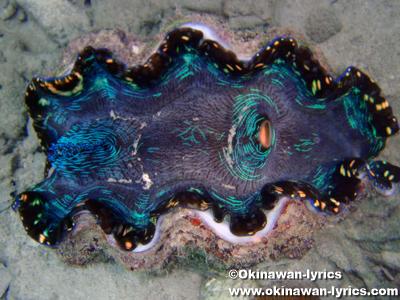 シュノーケル, 大シャコガイ(giant clam)@マカラカル島(Macharchar island)