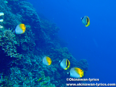 シュノーケル@パラダイス(Paradise),パラオ(Palau)