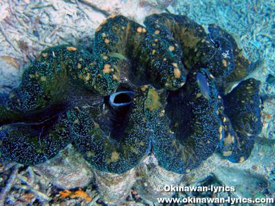 シュノーケル, 大シャコガイ(giant clam)@クラムシティ(Clam City), パラオ(Palau)