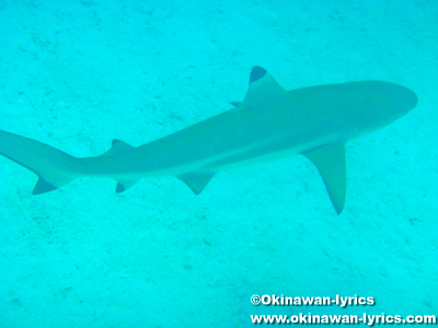 シュノーケル@シャークシティ(Shark City), パラオ(Palau)