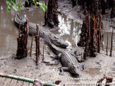 Palau Crocodile Farm and Reserve