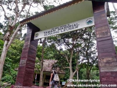 グヌン・レイセル国立公園(Gunung Leuser National park)
