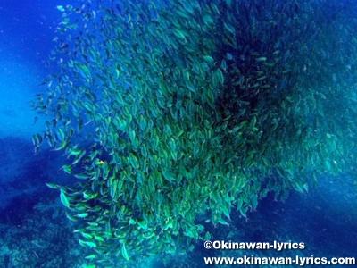 シュノーケル@カナワ島(Kanawa island)
