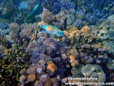 シュノーケル@レッドビーチ(Red beach), コモド島(Komodo island)