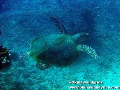 ウミガメとシュノーケル@Pungu island
