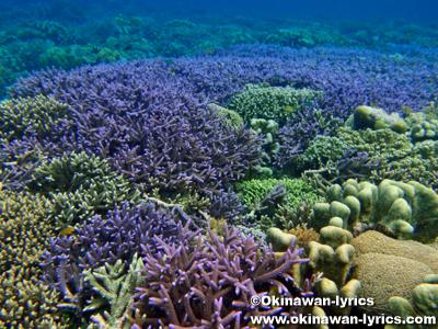 シュノーケル@ブナケン島(Bunaken island)Pulau Bunaken