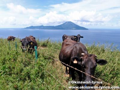 黒毛和牛@口之島, トカラ列島