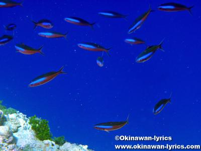 シュノーケル@キミシマ環礁(Neoch Atoll, Kuop Atoll)