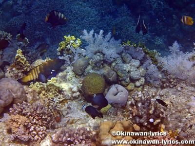 Tubod Marine Sanctuary@シキホール島
