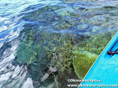 イダの浜沖でカヤック@西表島