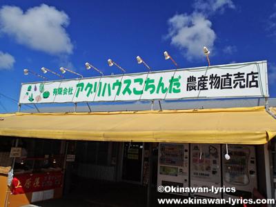 ドラゴンフルーツ、沖縄本島