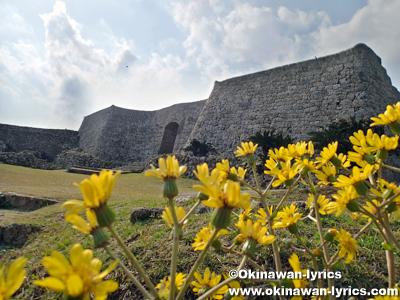 二の郭の城壁@中城城跡ツワブキまつり