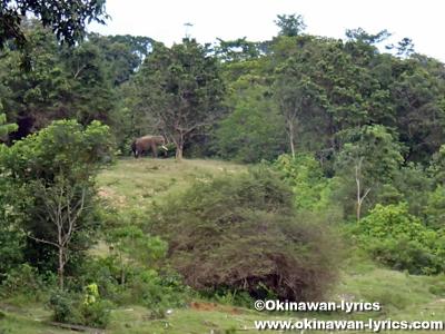 スマトラ島のスマトラゾウ保護センター