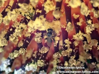 ショクダイオオコンニャクの雌花の上のハチ