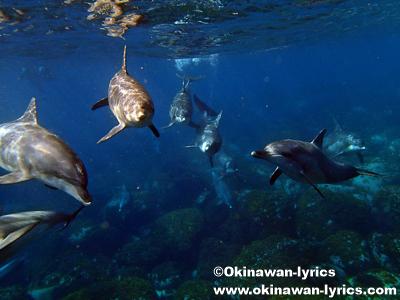 御蔵島でドルフィンスイミング