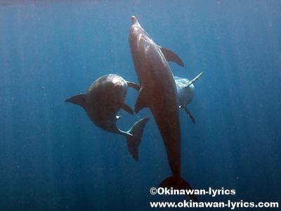 雄イルカの絡み合い