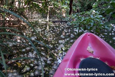 満開のサガリバナをカヤックで鑑賞@西表島浦内川