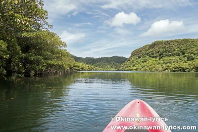 西表島の浦内川でカヤック